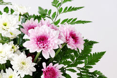 White and pink daisy bouquet on white background Royalty Free Stock Photo
