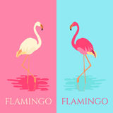 White and pink flamingo birds royalty free illustration