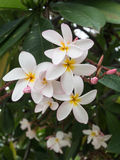 White pink flower background. Group stock photo