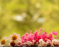 White and pink flower for background Stock Photos