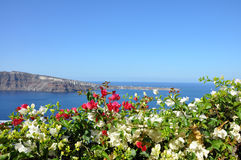 White and pink flowers on the background of Mediterranean sea and Santorini caldera. Concept of best summer vacation at the seaside on Greek cyclades islands Stock Images
