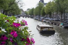 White and pink flowers with canal and boat as background in Amsterdam. In the summer day Royalty Free Stock Images