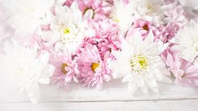 White and pink flowers on the white wooden background Royalty Free Stock Images