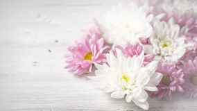 White and pink flowers on the white wooden background wide screen Stock Photo