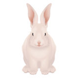 White and pink Happy Easter Bunny isolated - realistic Royalty Free Stock Images