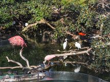 White and pink herons and turtles in the city park in Valencia, Spain stock photo