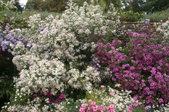 Pink and white flower bed Royalty Free Stock Images
