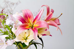 White and pink lily flowers Stock Photos
