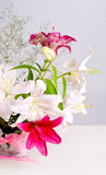 White and pink lily flowers Royalty Free Stock Images