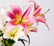 White and pink lily flowers Stock Photo