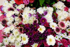 White and Pink Flowers, Chrysanthemums and Gerberas Stock Photos