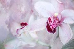 White and pink Orchid Stock Images
