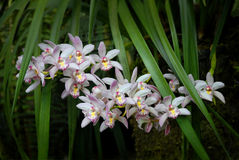 White pink orchids with green palm leaf Royalty Free Stock Image