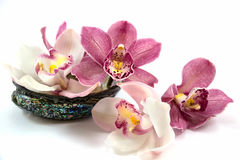 White and pink orchids. Isolated on white background, sitting in paua shell Stock Photo