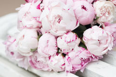White and pink peonies. Background, wallpaper. White and pink beautiful peonies. Background, wallpaper royalty free stock photography