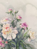 White pink peonies bunch watercolor Royalty Free Stock Photography