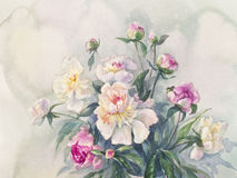 White pink peonies spray watercolor. Bouquet of white and pink peonies watercolor Stock Image