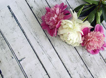 White and pink peonies on a wooden table, picturesque background Royalty Free Stock Images