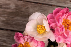 White and pink peony flower Paeonia bouquet Royalty Free Stock Photos