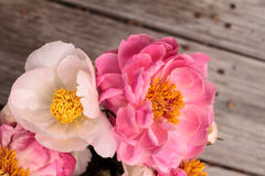 White and pink peony flower Paeonia bouquet Stock Photo