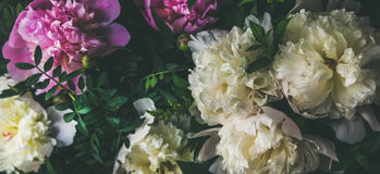 White and pink peony flowers over dark background. Natural pattern. Natural floral pattern, texture and background. White and pink peony flowers over dark Stock Photos