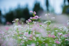 White And Pink Petaled Flowers Royalty Free Stock Photos