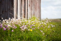 White Pink Petaled Flowers and Green Grasses Stock Photo
