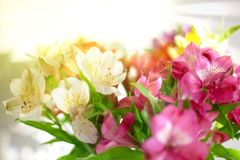 White, pink and purple lily flowers on blurred background closeup, soft focus lilies flower arrangement stock photos