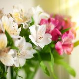 White, pink and purple lily flowers on blurred background closeup, soft focus lilies flower arrangement stock images
