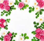 White pink rose flowers Floral flat lay frame background Stock Images