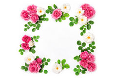 White pink rose flowers Floral Holidays background Stock Photo