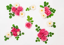 White and pink rose flowers with green leaves Royalty Free Stock Images