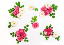 White pink rose flowers green leaves Floral flat lay Royalty Free Stock Photography