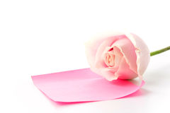 White and pink rose with pink paper note Royalty Free Stock Photos