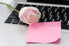 White and pink rose with pink paper note Stock Image