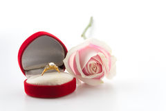 White and pink rose with ring box Royalty Free Stock Photography