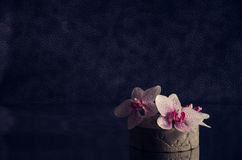 White and pink speckled Phalaenopsis orchid flowers in a concrete vase Stock Photography