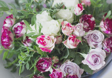 The white and pink spray roses background. Close up Stock Photo