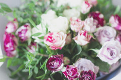 White and pink spray roses. Blurred focus. And close up Royalty Free Stock Photo