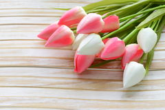 White and pink tulips flowers Stock Image