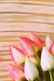 White and pink tulips flowers Stock Photography
