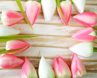 White and pink tulips flowers Royalty Free Stock Image