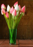 White and pink tulips flowers Royalty Free Stock Images
