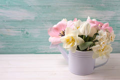 White and pink  tulips and narcissus in decorative watering can Stock Photos