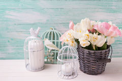 White and pink  tulips and narcissus in  grey bucket Stock Photo