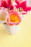 White and pink tulips on yellow stripes Royalty Free Stock Images