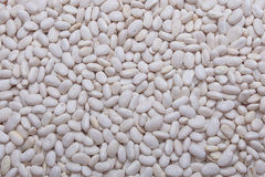 White Pinto Beans Royalty Free Stock Photography