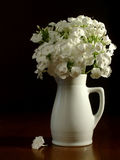 White pitcher & flowers. A white pitcher with white phlox flowers Royalty Free Stock Image