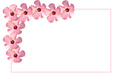 White Placecard Bordered in Pink Flowers Royalty Free Stock Photos