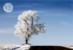 White planet. With alone white tree and earth in the sky royalty free stock photo